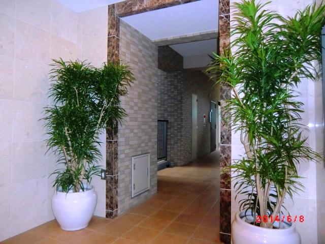 エントランス観葉植物(ドラセナ・リフレクサ)
