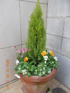 フォンテーヌ駒沢 鉢植え