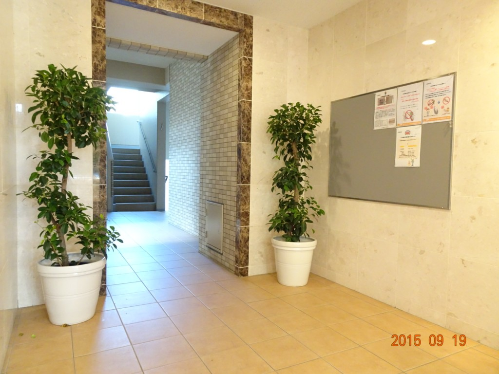 フォンテーヌ駒沢 エントランス観葉植物「ガジュマル」