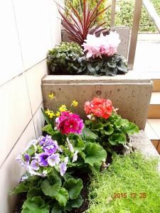 フォンテーヌ駒沢 正月花壇