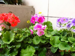 フォンテーヌ駒沢 冬花壇