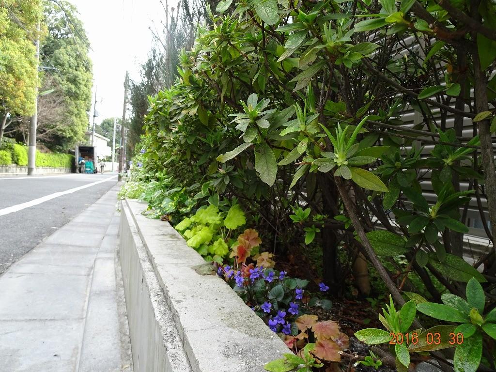 フォンテーヌ駒沢道路側花壇