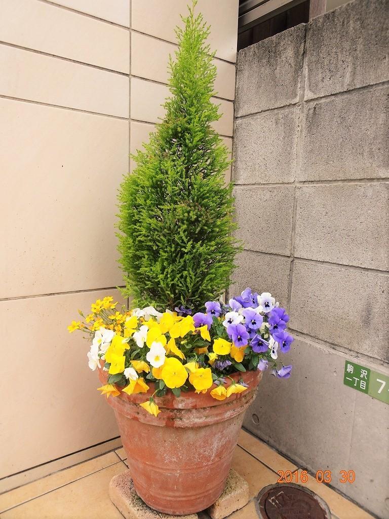 フォンテーヌ駒沢 スロープ横植木鉢