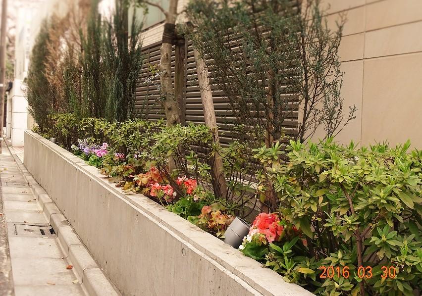 フォンテーヌ駒沢道路側 花壇