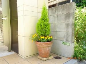 駐車場横の植木鉢